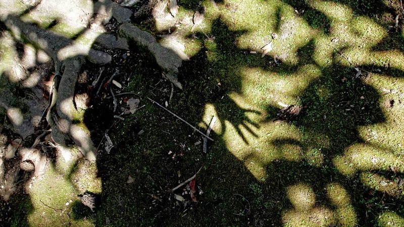 Moss shadow at rowan oakblog