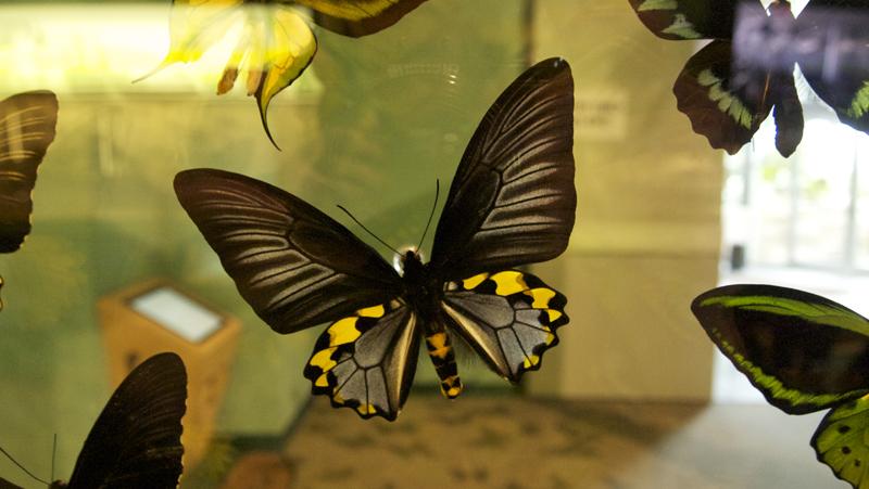Butterfly tx